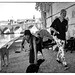 Apparently homeless couple,  their wordly goods and their dogs under the Porte Vittorio Emanuele II by Louis George 2011