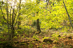 Wald im Oktober - Forest in October