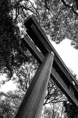 Torii in the Trees