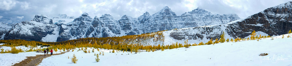 Snow, Larch and Rockies