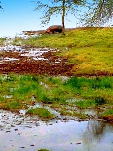 newyork brooklyn dmitriyfomenko image sky clouds kenya svetlanafomenko lakenakurunationalpark grass trees lake water animal reflection hippopotamus