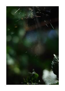 2018/9/22 - 23/24 photo by shin ikegami. - SONY ILCE‑7M2 / Carl Zeiss C Sonnar T* 1.5/50 ZM