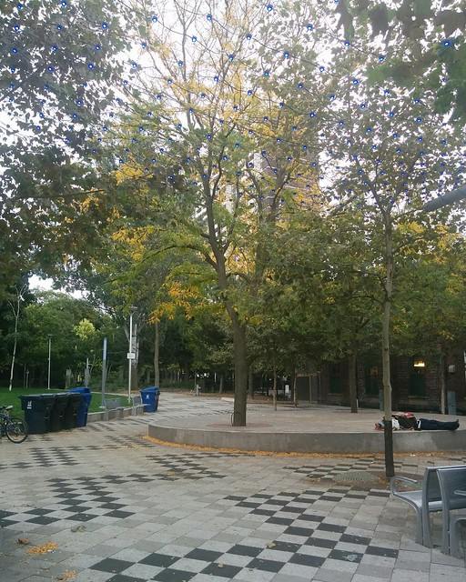 Looking east across Barbara Hall Park #toronto #churchandwellesley #churchstreet #skyline #barbarahallpark #autumn #fall