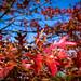 Herbstbeginn