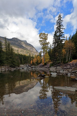 Trees and Livingston Range, Flathead County, Montana