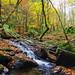 Birnam Glen and the Inchewan Falls