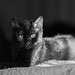 I love cats, these animals from the shadow which come to snuggle close to the heart, purring stories that few human beings understand by Lux Obscura