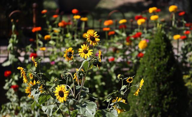Country Garden Pleasures