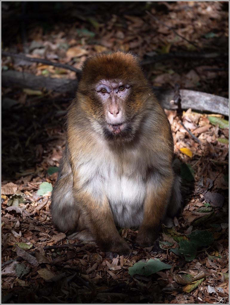 Terre des singes part3 44093462385_d2b5e9a5b3_b