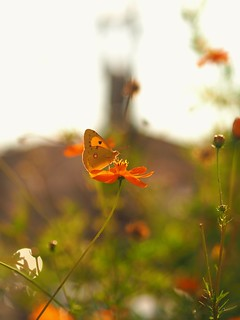 Butterfly at the Belltower