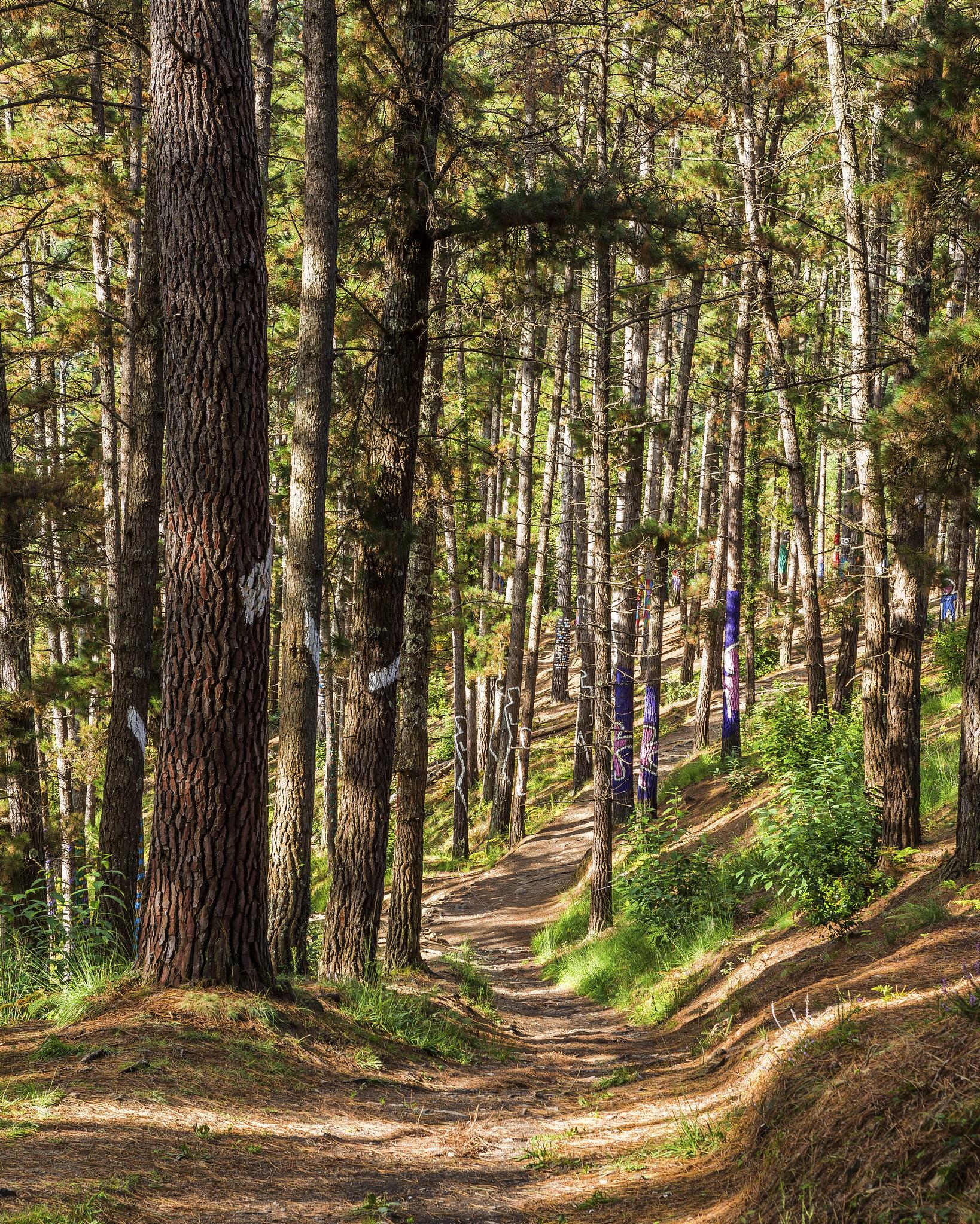 Adentrándose en el bosque