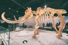 New Royal Alberta Museum