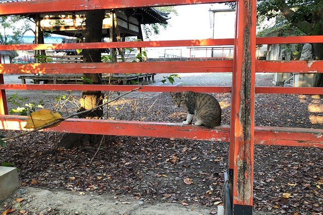 Today's Cat@2018-10-11
