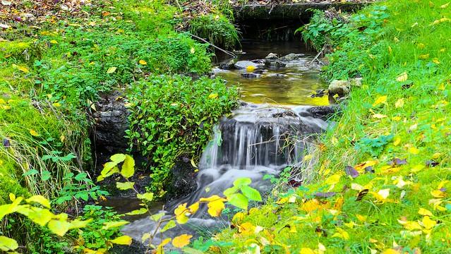 Ruisseau Crupet - 6045