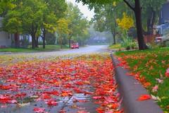 Rainy Minnesota Autumn