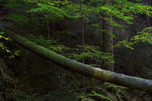 in the woods VIII