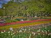 Photo:チューリップの花園で XVI By jun560