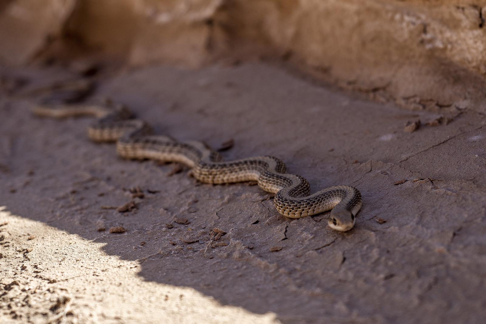 Snake Snake