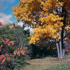 Autumn in Manotick