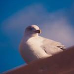 Bird Sky - Fehmarn - Schleswig-Holstein - Germany