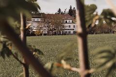 Hotel Burgwald through leaves