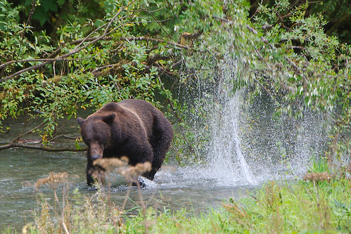 Aug 27 Fish Creek near Hyder AK