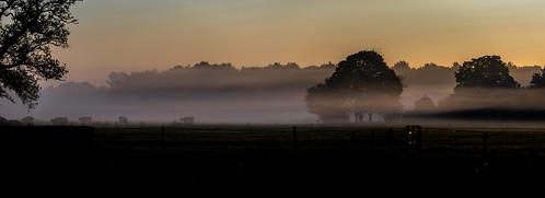 Good Morning Fog