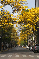 Tucumán / Argentina