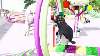 Pingu Olympics Testing 1
