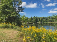Goldenrod and Grangers pond