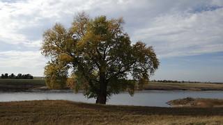 Ebener Boden am linken Ufer bei Graditz 00404