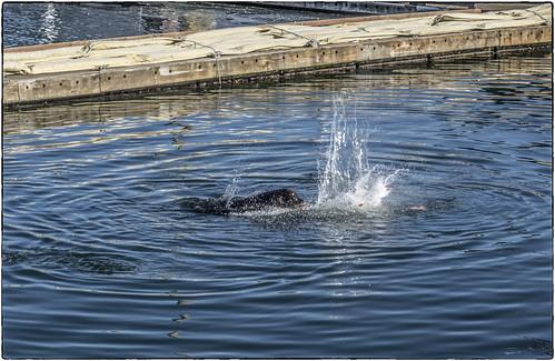 Westport Sea Lion