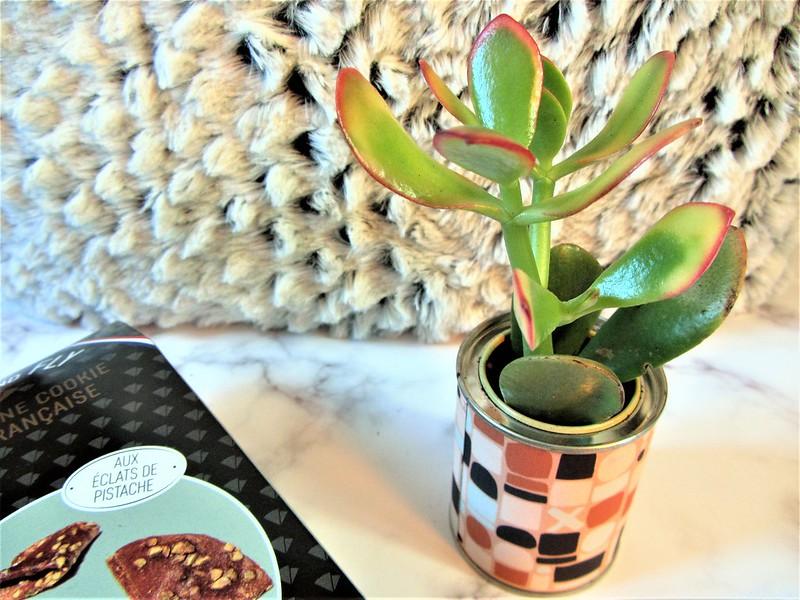 french-coco-box-plante-aloès-thecityandbeauty.wordpress.com-blog-lifestyle-IMG_1407 (2)