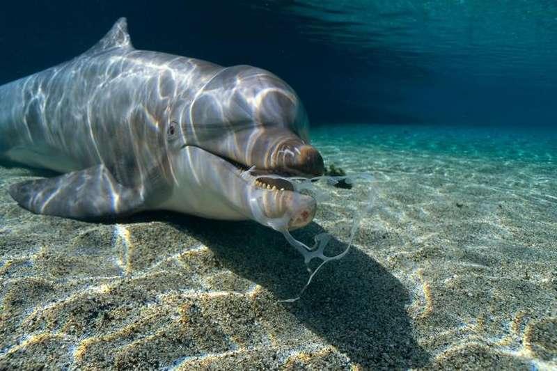 animaux-océan-microplastiques-1