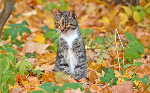 - I see a mouse!!! (Autumn cats -series)