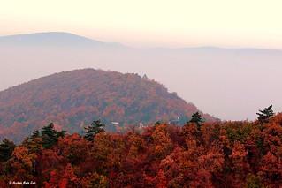 Foggy day on the Buda hills