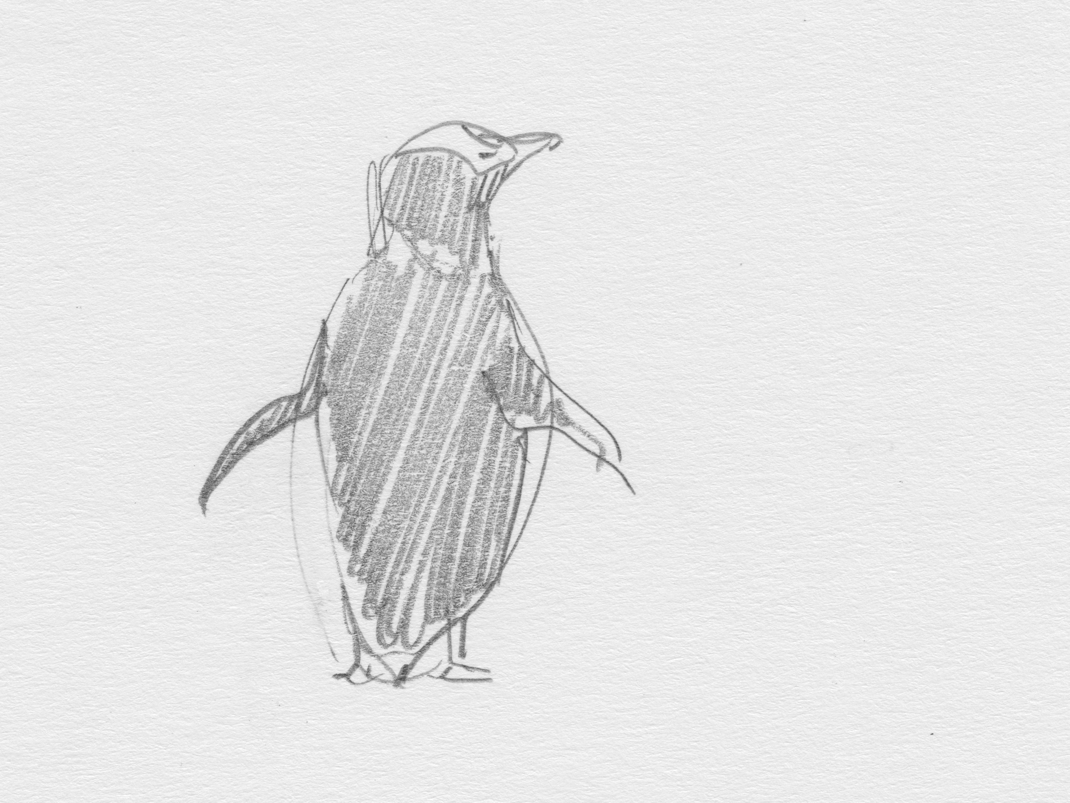 Sketches from Seabirdland - Open Explorer