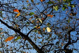 Jesień - Autumn DSCF8581.jpg silky