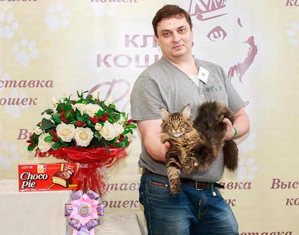 Сколько стоит разводить породистых кошек в России фото