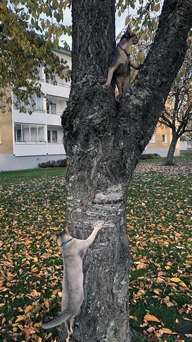 zakrorytree_4941