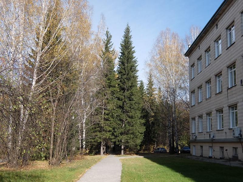 Новосибирский академгородок - Дорожка рядом с корпусом института