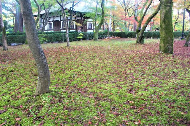 shinnyodo-koyo022