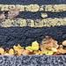 autumn on the ground