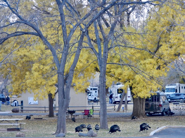 Turkeys in the Campground, Nikon COOLPIX AW100