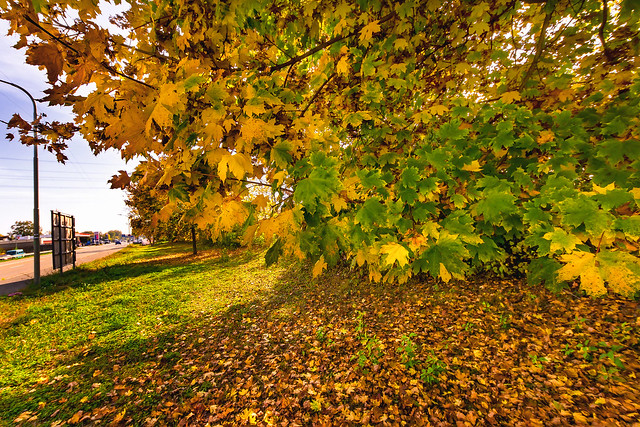 Autumn colors | Sigma 8~16mm ƒ/4.5~5.6 DC HSM on SONY ⍺6000