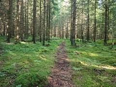 Midt mot strømlinja - Prestegårdsskogen - Askim - Norway