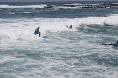 Surfin' Sparrow