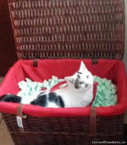 Sun, Sep 23rd, 2018 Lost Female Cat - R348, Kiltullagh, Galway