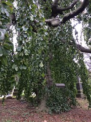 Cemetery of the Evergreens, Brooklyn