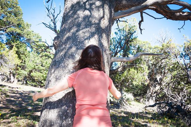 Tree Huggers Unite!